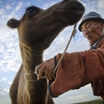 Mongolia camel herder, Semi-Gobi Desert, Mongolia, Jocelyn Voo Aw Yeah Photo travel photography