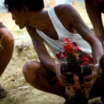Man prepares his chicken for cockfighting, Yangon, Myanmar Jocelyn Voo Aw Yeah Photo travel photography