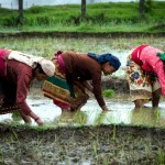 Pokhara women rice paddy farmers Nepal travel photography nature Jocelyn Voo Aw Yeah Photo travel photography
