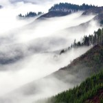 fog rolling into forests on mountains in Reedsport, Oregon