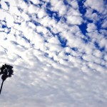 palm tree silhouette against clouds in blue sky