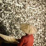 Myanmar photography, woman drying tea leaves on tea plantation